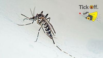 Werkt IR3535 tegen de drager van het Zika virus?